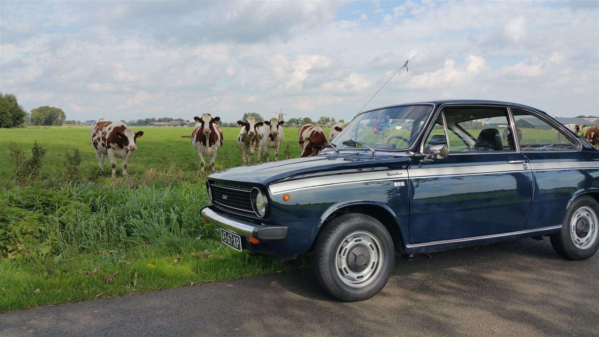 Dafne koeien 21 september 2015